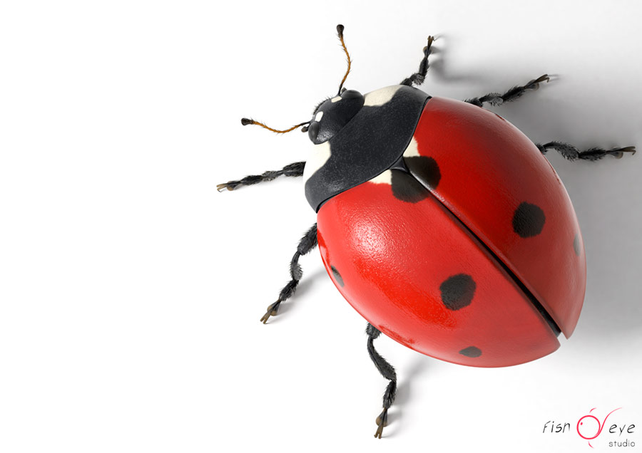 illustration of a ladybug in 3d 01