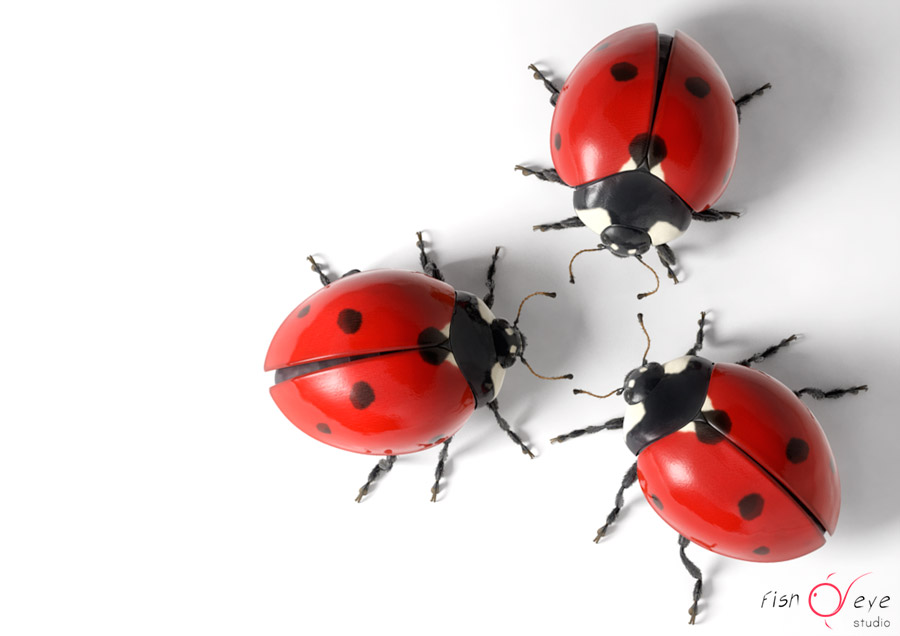 illustration of a ladybug in 3d 02